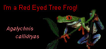 I'm a Red Eyed Tree Frog!